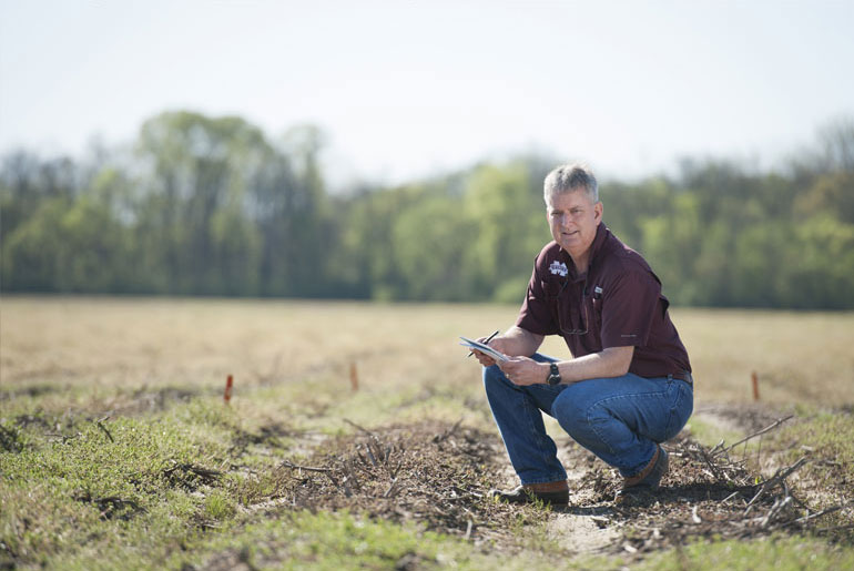 MSU weed science professor named Hartwig chair
