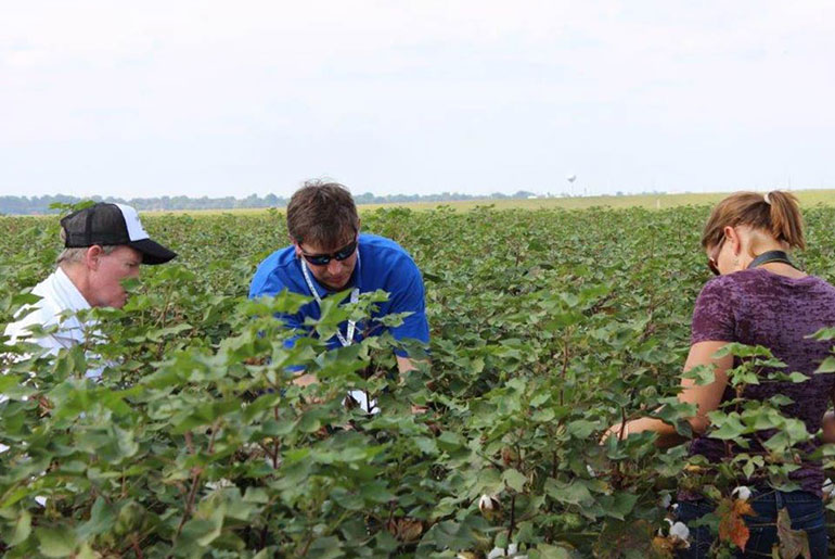 three individuals in a cotton field