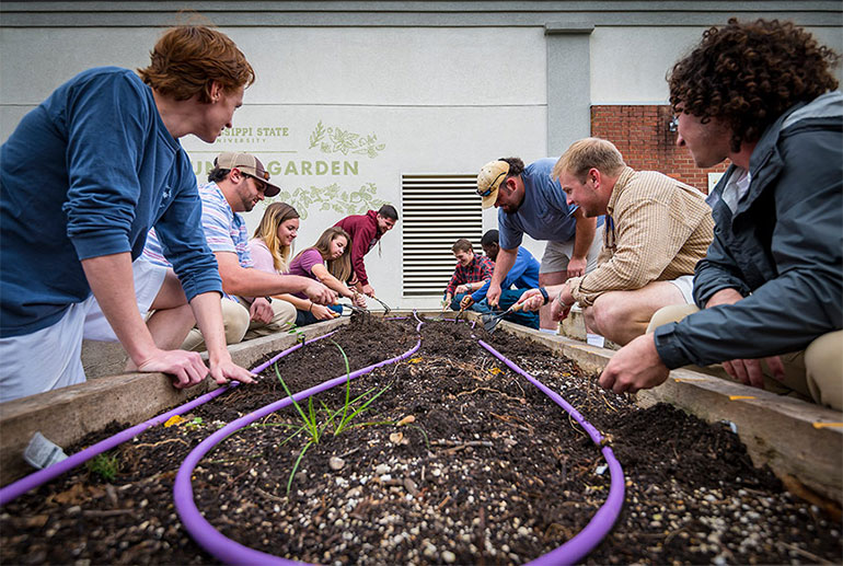 Student collaboration in MSU Community Garden bears first fruits
